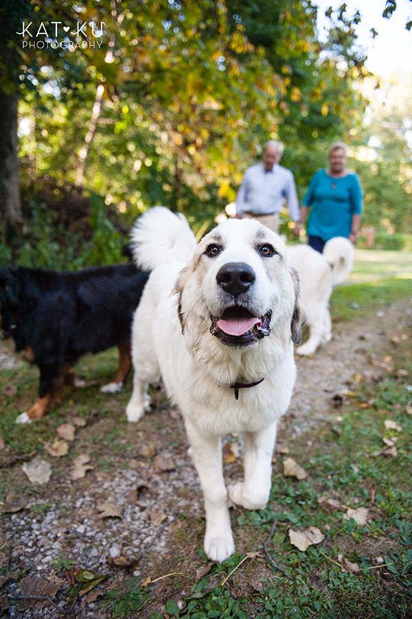 Kat Ku_Great Pyrenees_Bernese Mountain Dog_Photo_27
