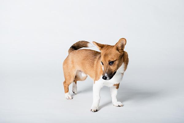 Kat Ku Photography_Studio Dogs_02