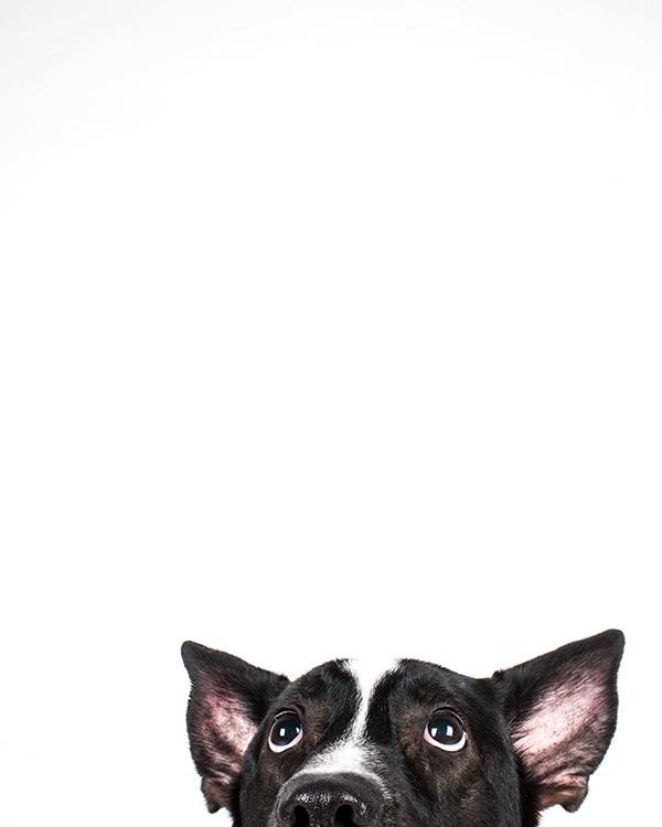 Kat Ku Photography_Studio Dogs_03