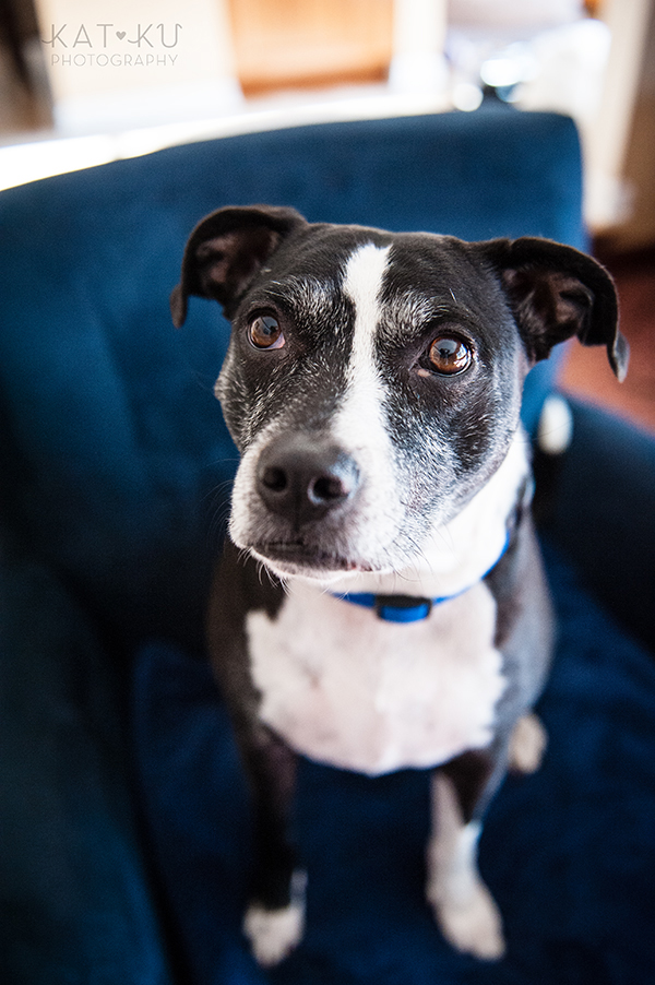 Kat Ku Photography_Ypsilanti_Rescue Dogs_01