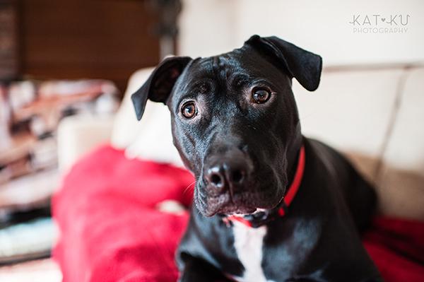 Kat Ku Photography_Ypsilanti_Rescue Dogs_08