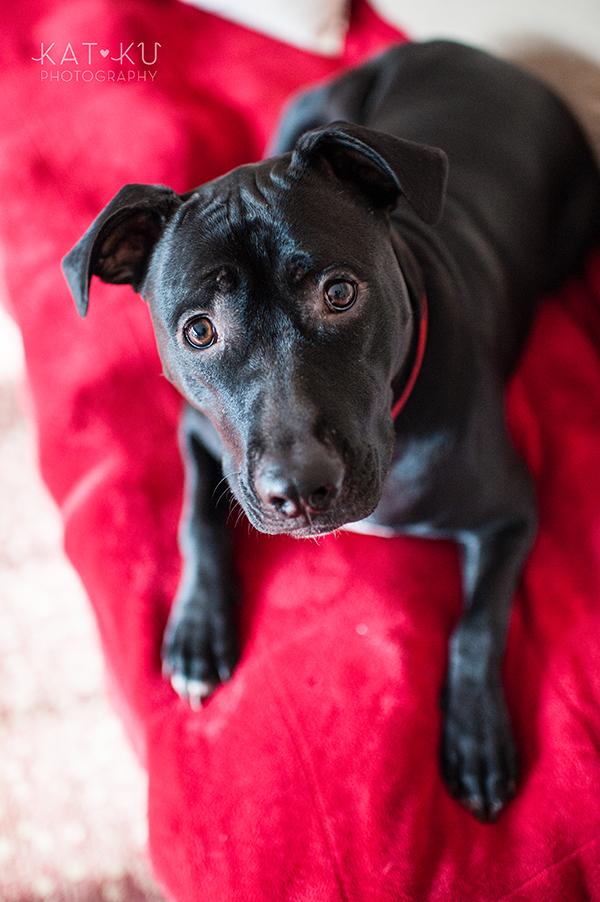 Kat Ku Photography_Ypsilanti_Rescue Dogs_09