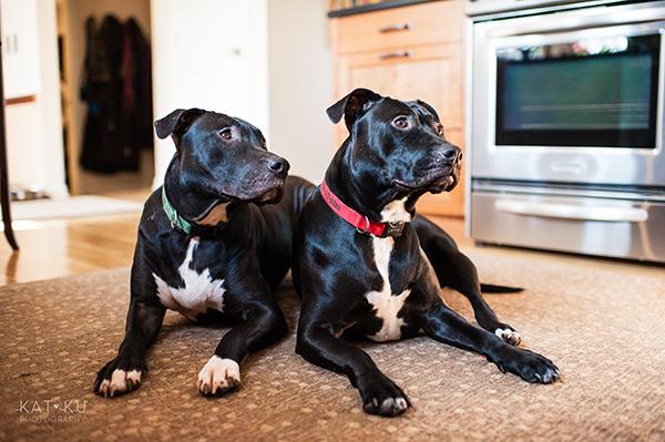 Kat Ku Photography_Ypsilanti_Rescue Dogs_11