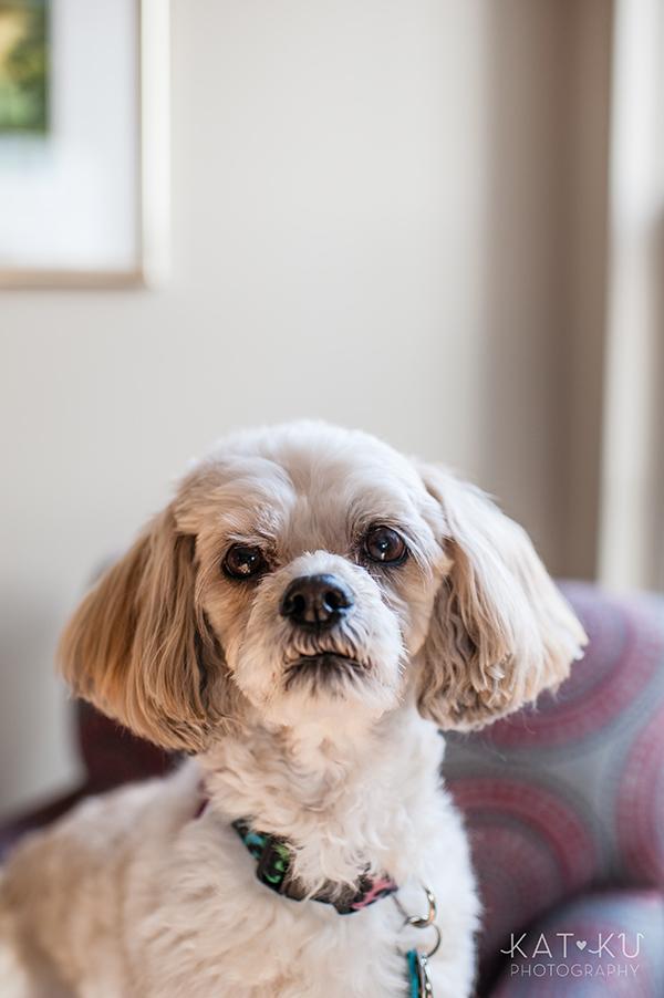 Kat Ku_Mattie and Jinx_Ann Arbor Dog Photography_01