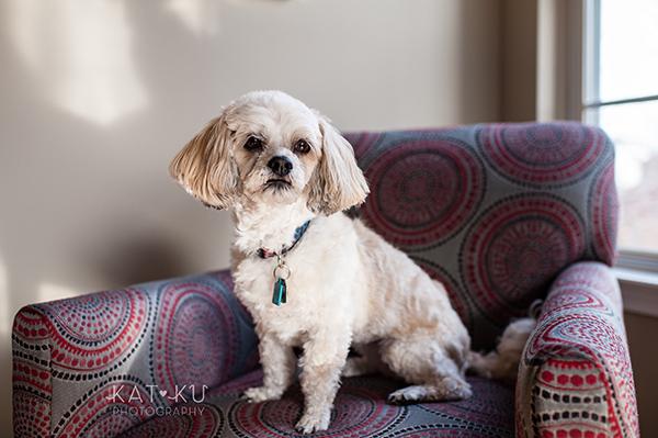 Kat Ku_Mattie and Jinx_Ann Arbor Dog Photography_02