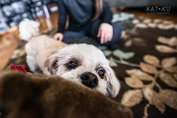 Kat Ku_Mattie and Jinx_Ann Arbor Dog Photography_08