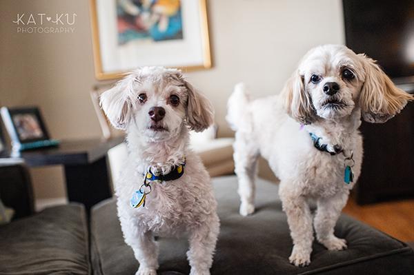 Kat Ku_Mattie and Jinx_Ann Arbor Dog Photography_10