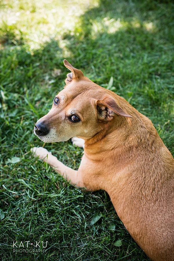 Kat Ku Photography - Michigan Dog Photographer_Baby_02