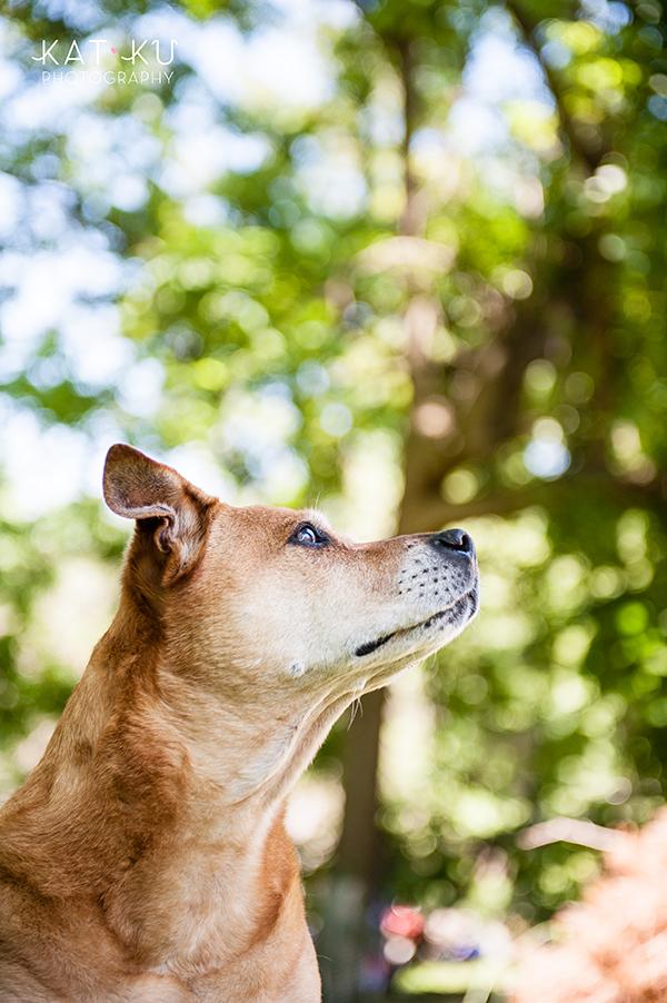 Kat Ku Photography - Michigan Dog Photographer_Baby_03
