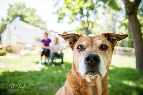 Kat Ku Photography - Michigan Dog Photographer_Baby_06