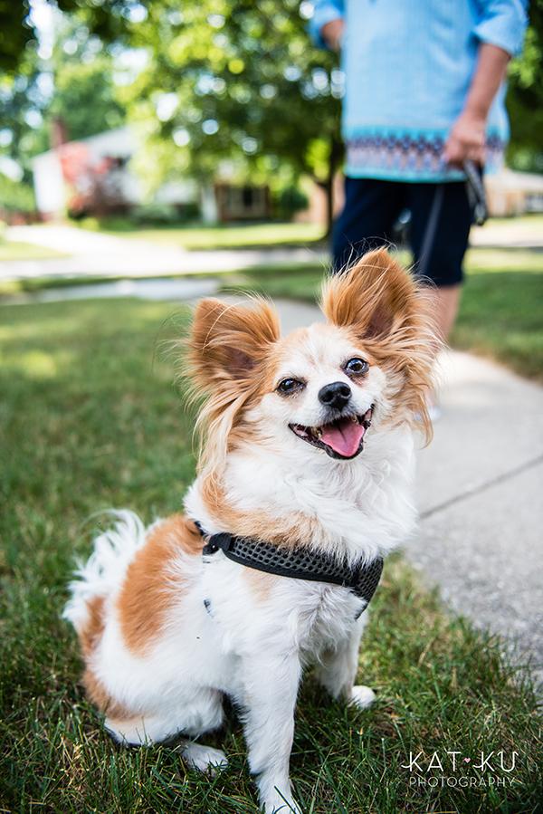 Kat Ku - Royal Oak Pet Photography_02