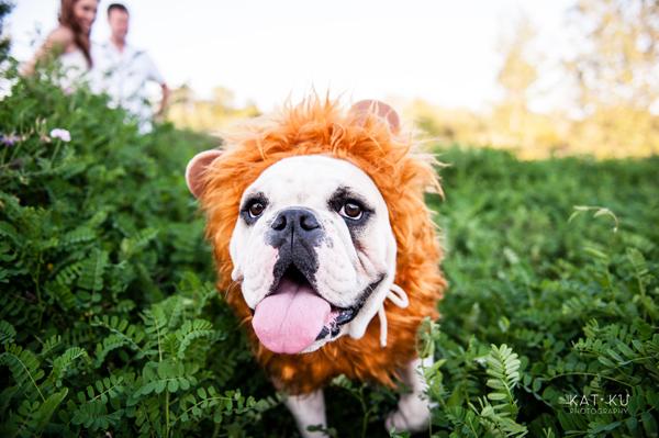 kat-ku-gemma-english-bulldog-pet-photography_24