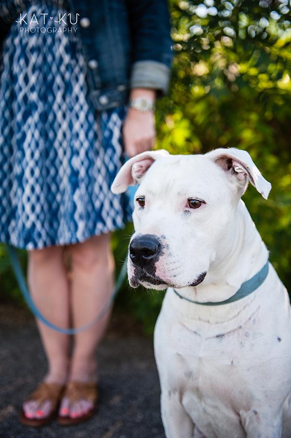 kat-ku-jake-heisenberg-detroit-dog-photos_03