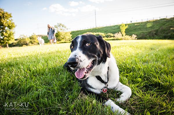 kat-ku-jake-heisenberg-detroit-dog-photos_12