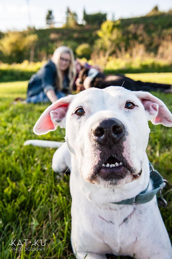 kat-ku-jake-heisenberg-detroit-dog-photos_13