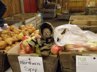Lippe selecting apples