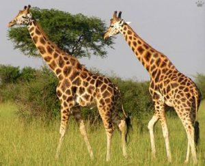 Tour to Kidepo National Park