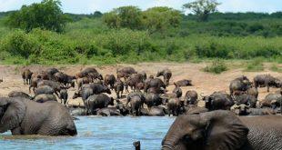 uganda safari queen elizabeth