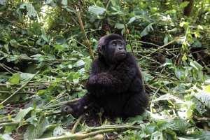 Uganda Grand Safari