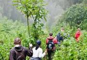 Gorilla Habituation Experience in Uganda Bwindi Forest