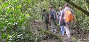 Budongo Forest