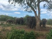2 Days Queen Elizabeth National Park Tour Uganda