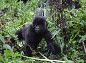Congo Virunga National Park