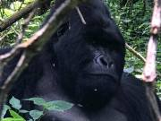 4 Days Gorilla Trekking and Batwa Trail in Mgahinga Park Uganda