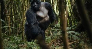 Gorilla Trekking Tips