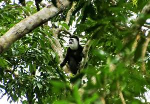 Tourist Activities in Nyungwe Forest National Park