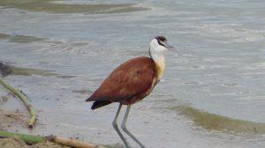 Bird Watching on Lake Bunyonyi