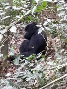 Kigali Gorilla Tour Prices
