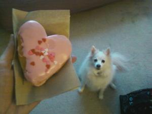 american eskimo dog, pink doughnut, dunkin' donuts