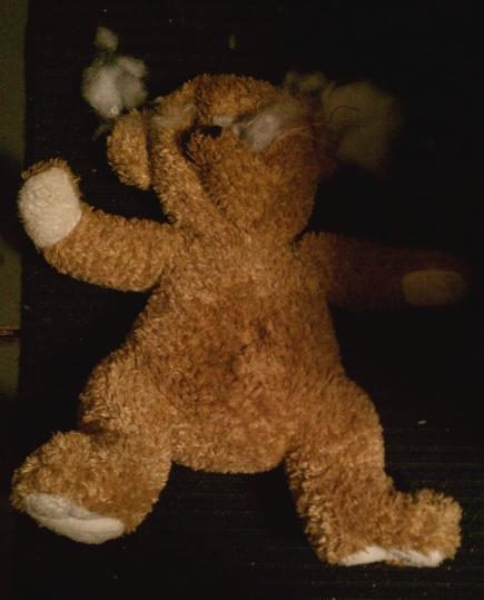 torn teddy