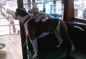 Bella-back ride