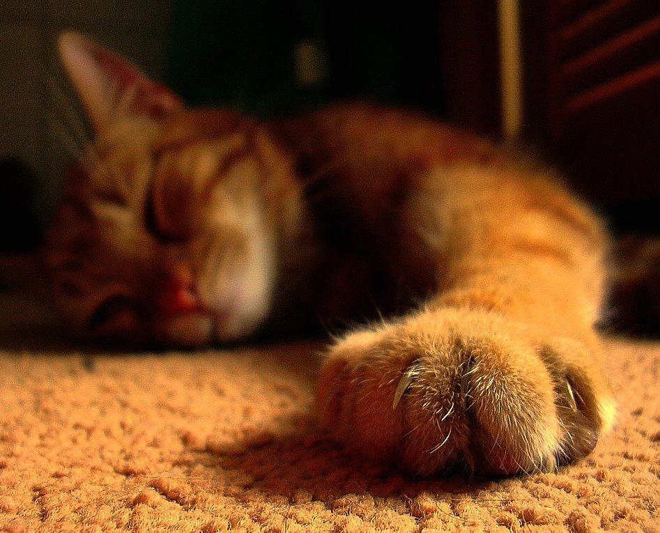 Katter: Bilde av kattens klør, ja de som ødelegger møblene og gjør at de markerer sine revir.