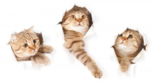 diarre katt medicin