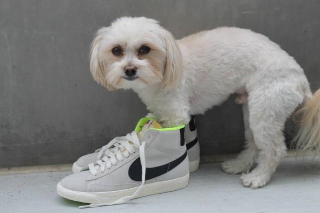 KatWalkSF Nike Mid Vintage Sneakers