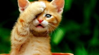 Lustige Tiere Accueil Facebook