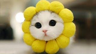 Lustige Tiere Lustige Videos Zum Totlachen 17 Youtube
