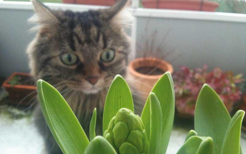 Für Katzen Giftige Pflanzen Vermeidbares Vergiftungsrisiko