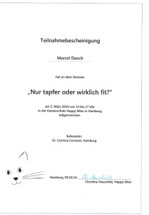 Qualifikation GOLD CAT Katzenbetreuung Hamburg Marcel Danch. Katzenseminar Nur tapfer oder wirklich fit in der Katzenschule HAPPY Miez