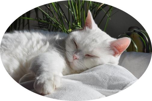 Katze auf der Couch, schläft und entspannt bei der Katzenbetreuung Hamburg GOLD CAT ihr Katzensitter Marcel Danch