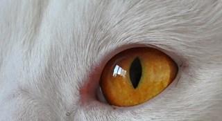 Unsere Katze Maja ist jetzt auf bei YouTube