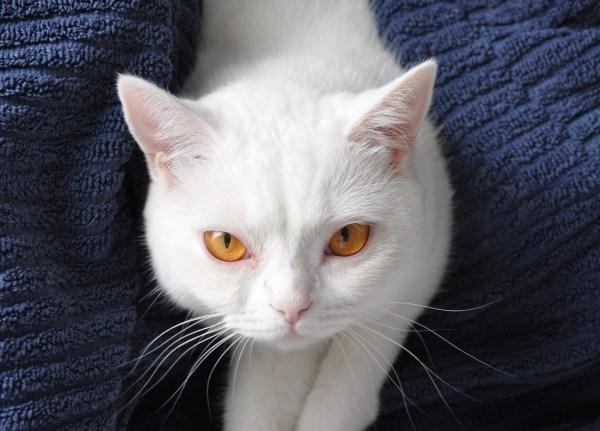 GOLD CAT Katzenbetreuung Hamburg Ihr Katzensitter