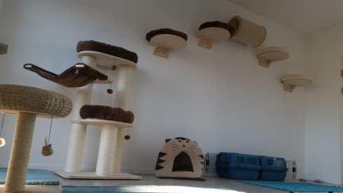 Katzenhotel