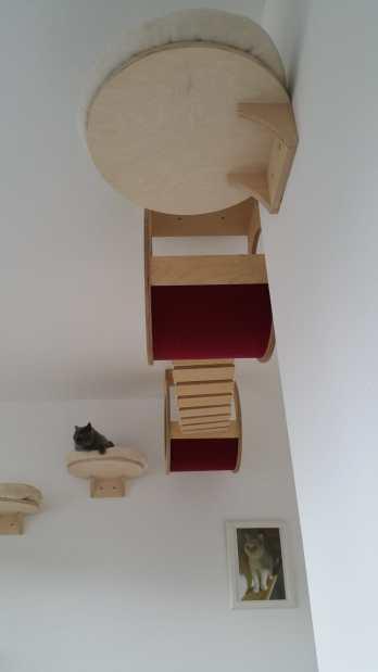 Katzenhotel GOLD CAT