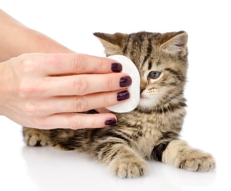 Tränende Augen Bei Katzen Ursachen Und Behandlung
