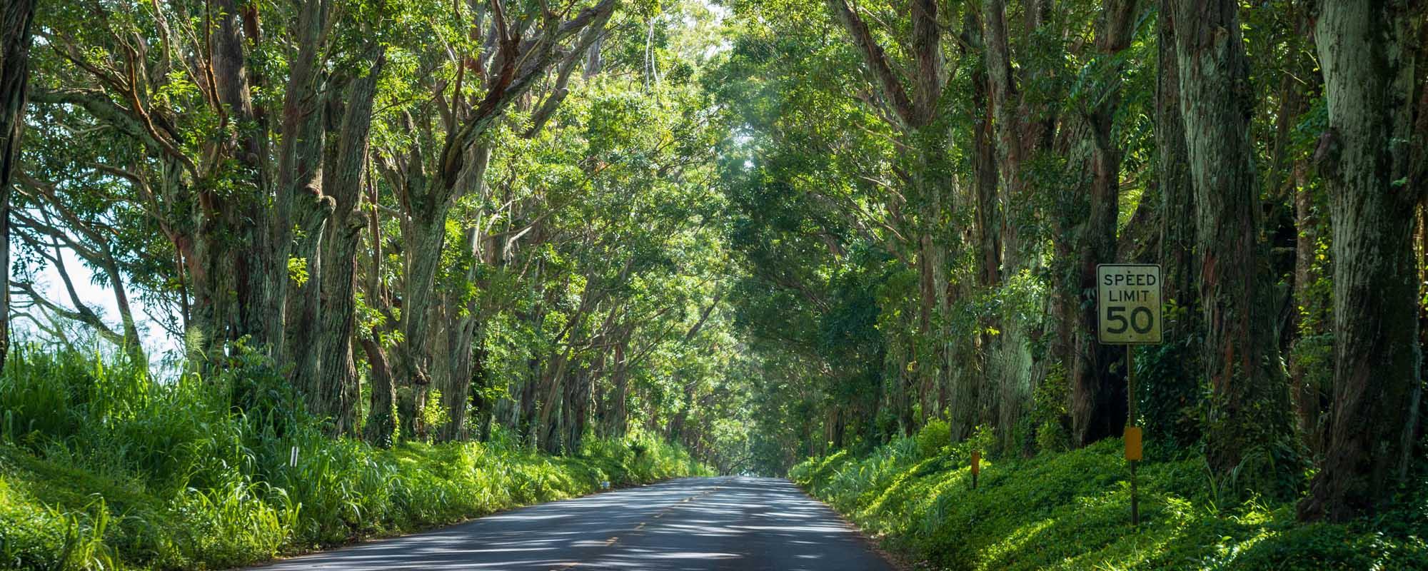 Hawaii Web Design Trees