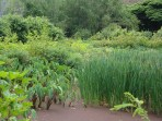 Cattails-in-a-taro-loi-small